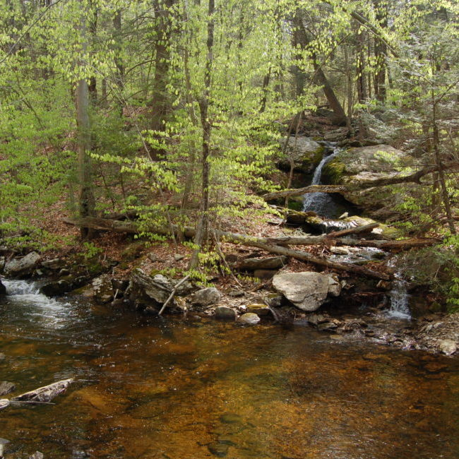 Jabish Brook Waterfall In Spring