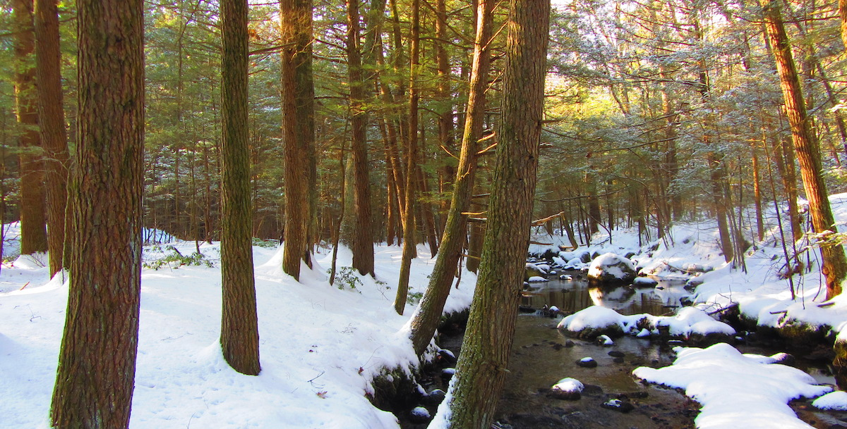 Greenberg Woods And Stream In Winter