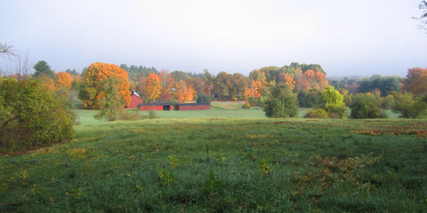 Ricci Conservation Area Field And Barns