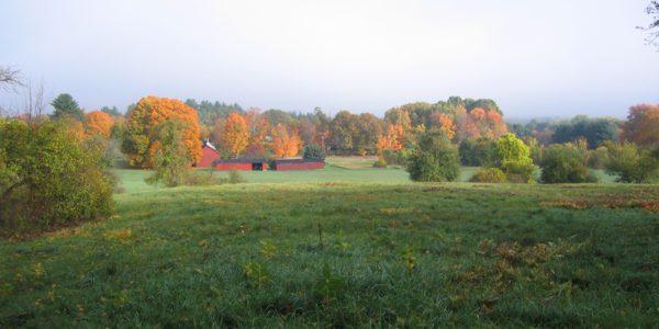 Ricci Conservation Area