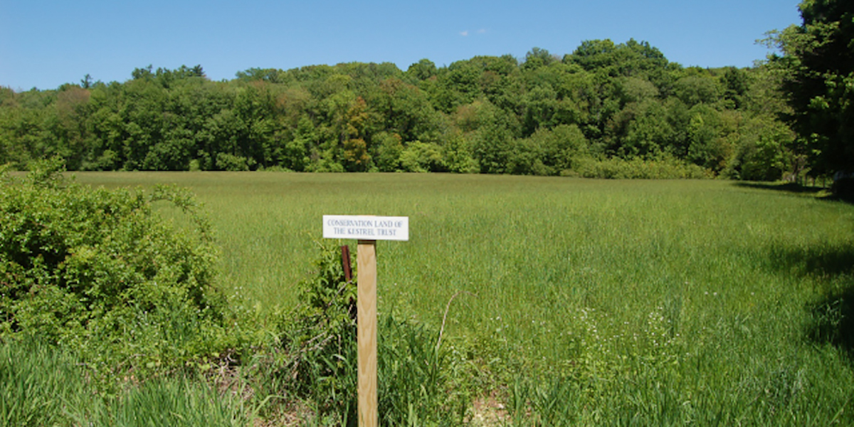 Grassy Field At Kestrel's Dyer Conservation Area