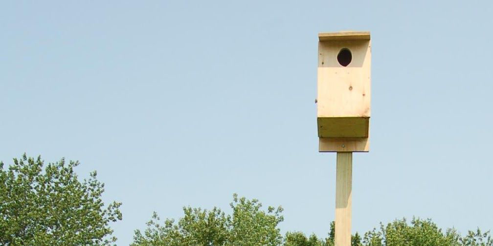 Wooden Kestrel nest box