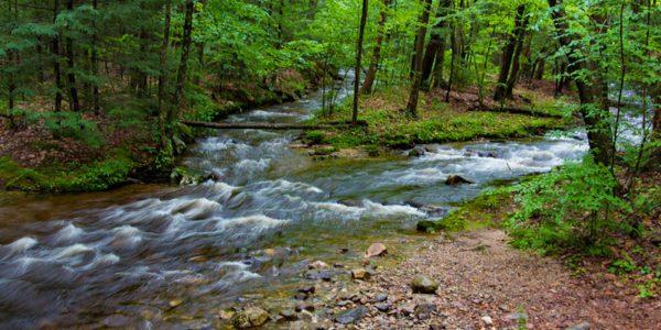 Two Streams Merge In The Woods At Amethyst Brook