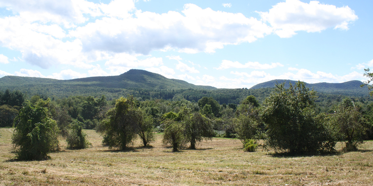 View Of Mt. Holyoke Range From Old Orchard At Mt. Pollux