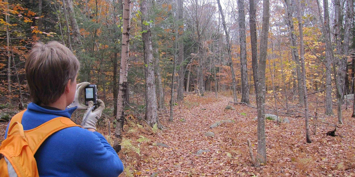 Woman photographing a woodland path