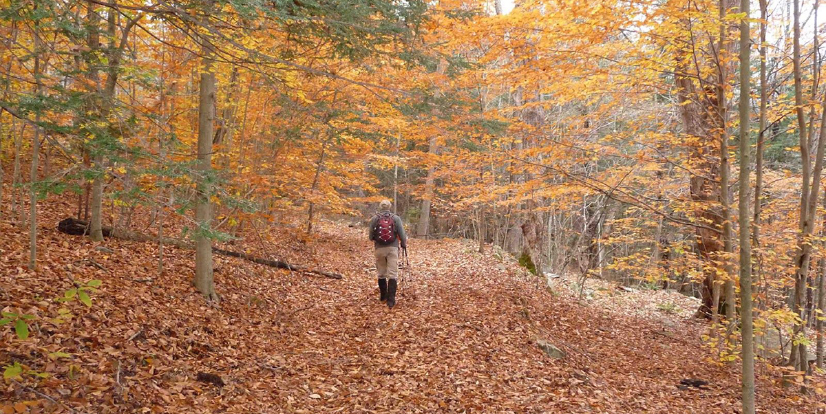Hiker walking up a wooded path in autumn