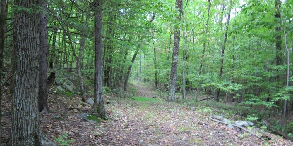 Walking trail on Horse Mountain