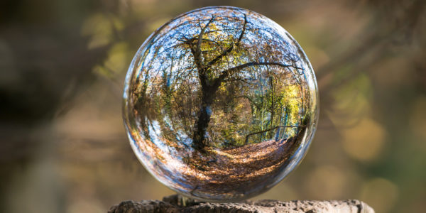 Bubble Reflecting A Forest