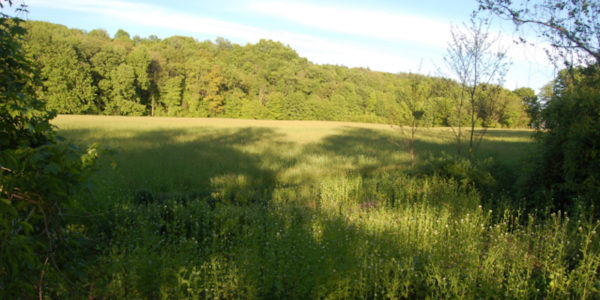 Field And Forest At Dyer Property