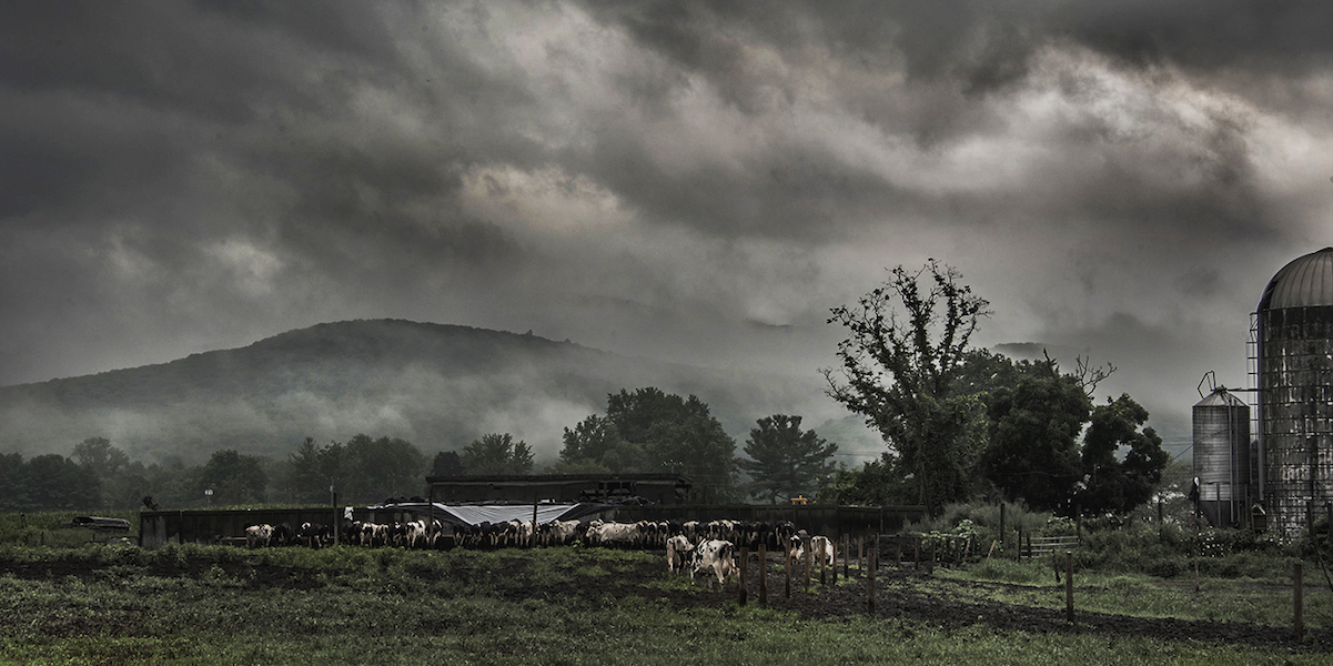 Foggy Farm Michael Zide
