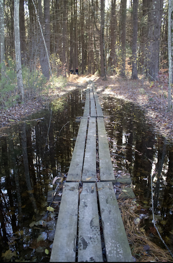 Lawrence Swamp wet boardwalk
