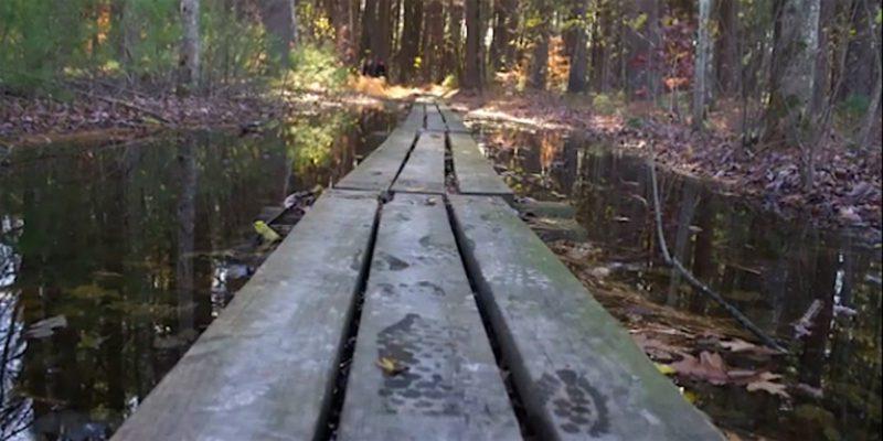 Footprints On Boardwalk Lawrence Swamp