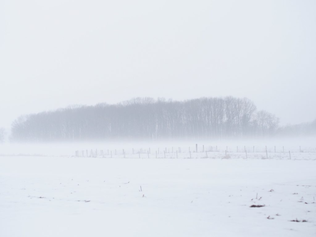 Winter fog over field