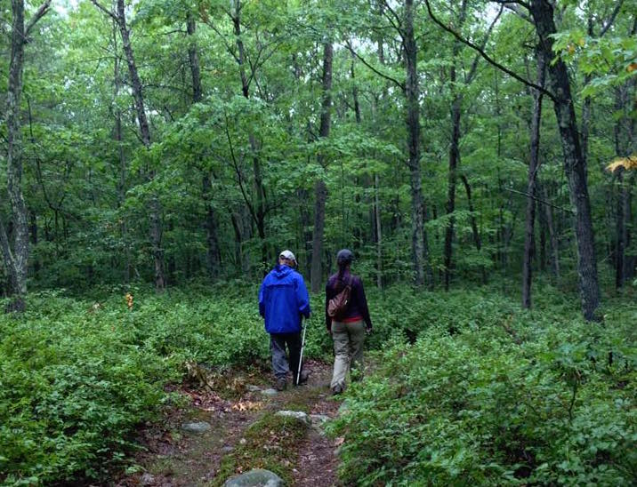 two people walking in woods rainy day