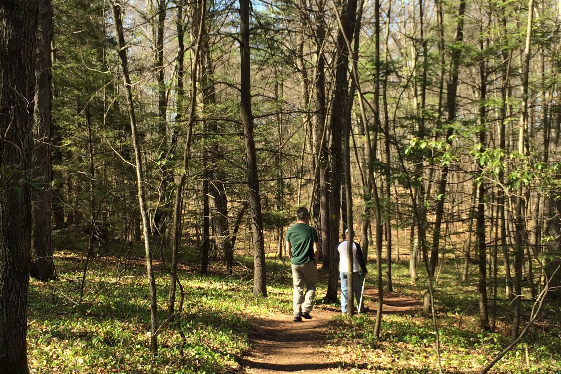 Spring Woodland Trail With Walkers