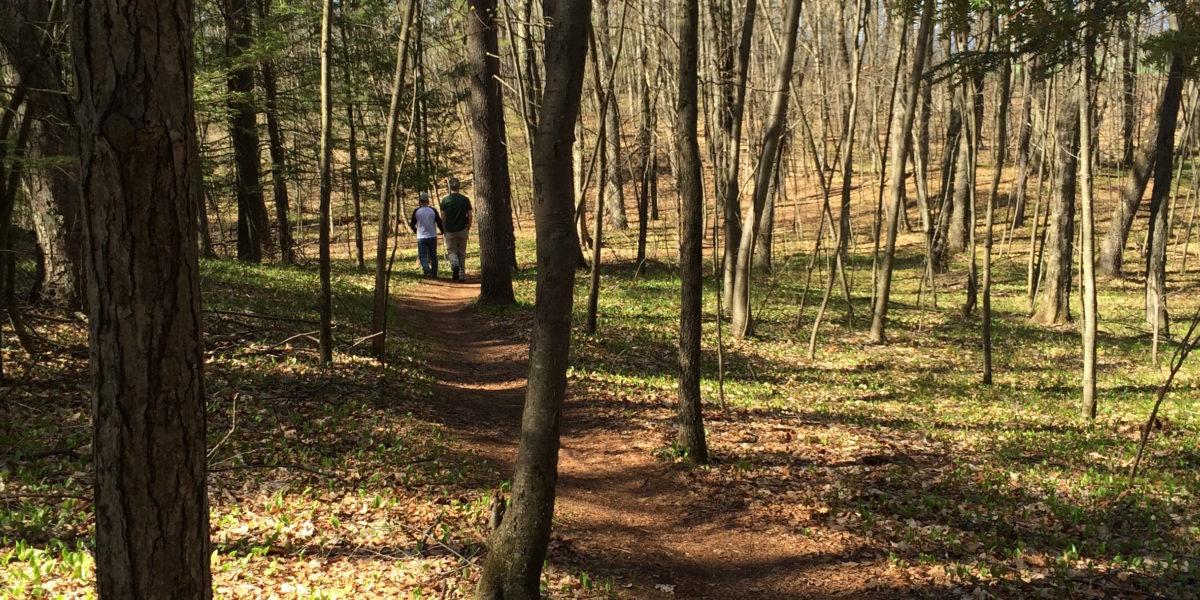spring woodland trail