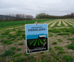 Forever Farmland sign on Berry Farm