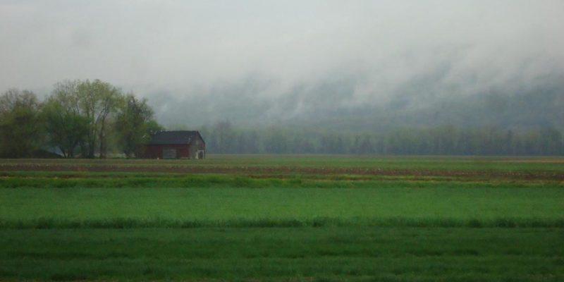Berry Farm In Mist