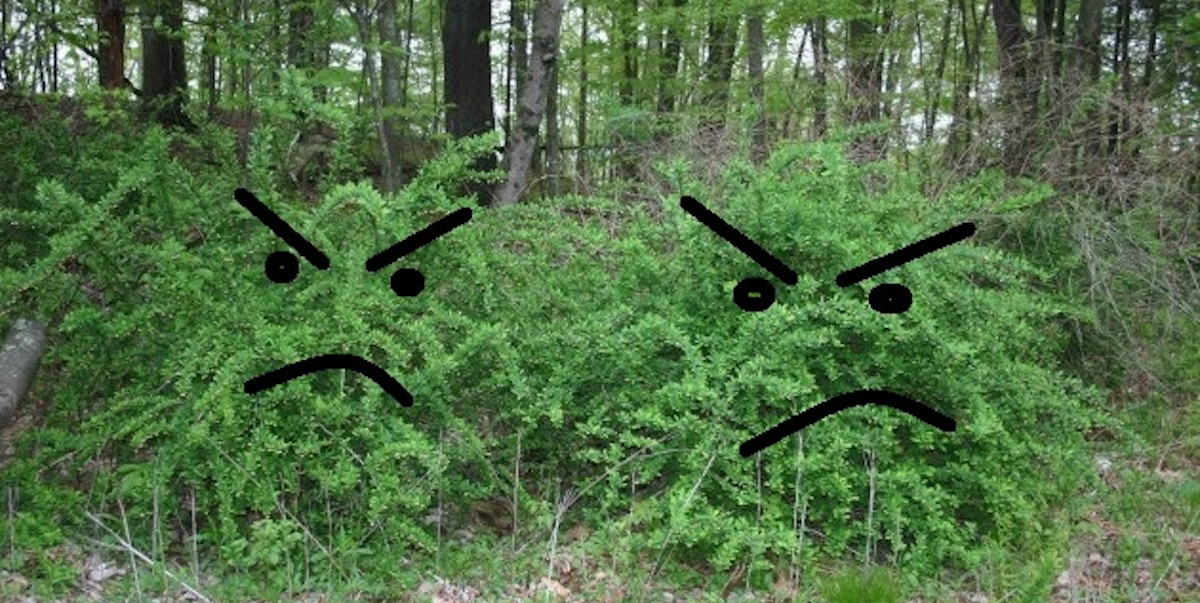 The Good Fight: Controlling Invasive Plants