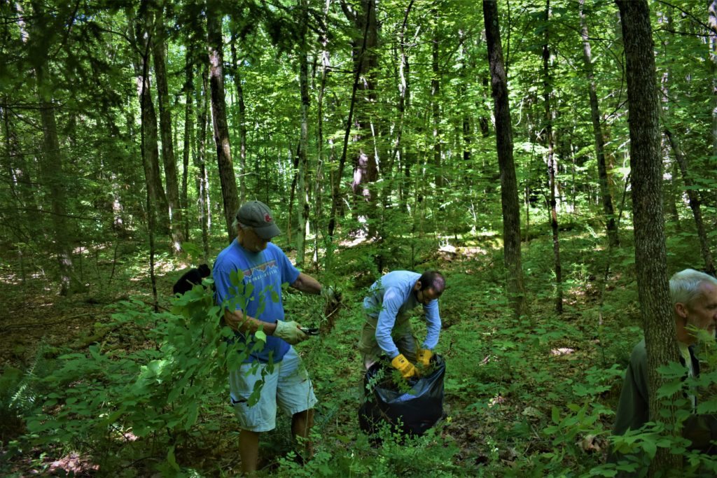 Volunteers working in woods