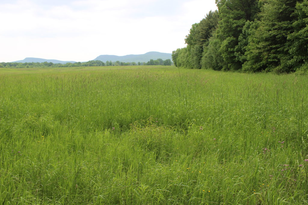 Meadow and Range