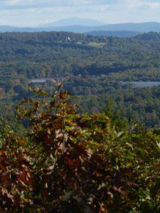 Brewer Brook forest view