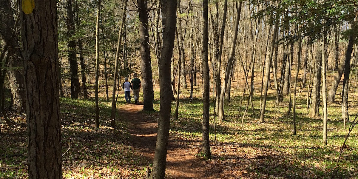 Two People Walking On Spring Woodland Trail