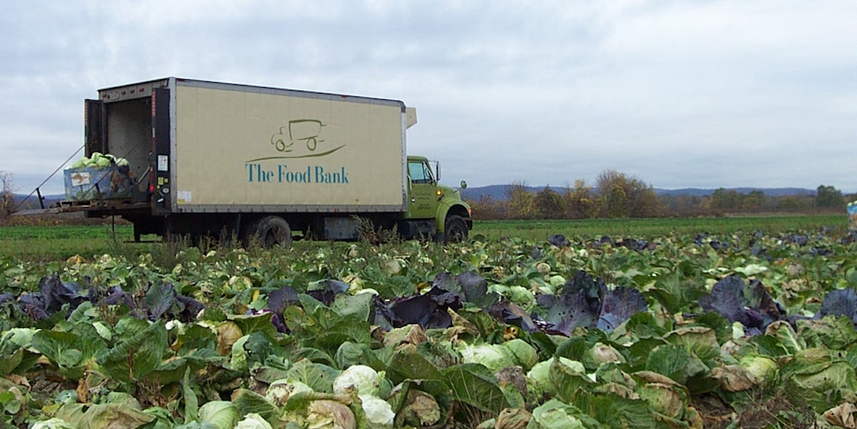 Food Bank Truck In Cabbage Field
