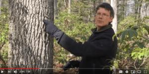 Michael Wojtech video