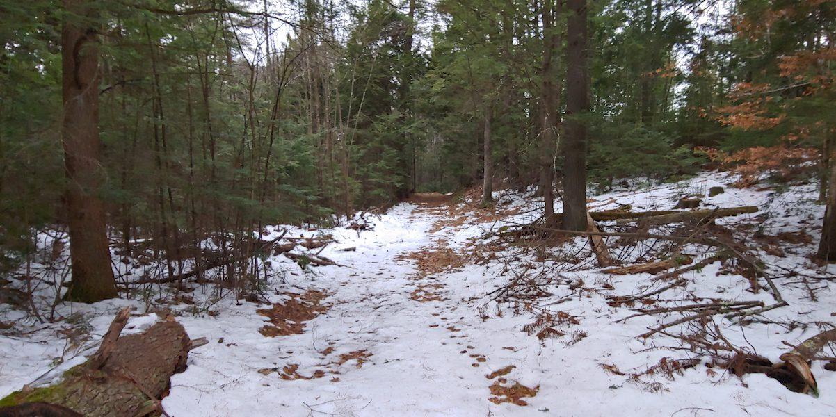 Buffam Brook Community Forest winter trail