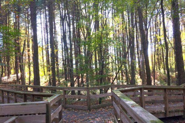 Conte Trail Boardwalk