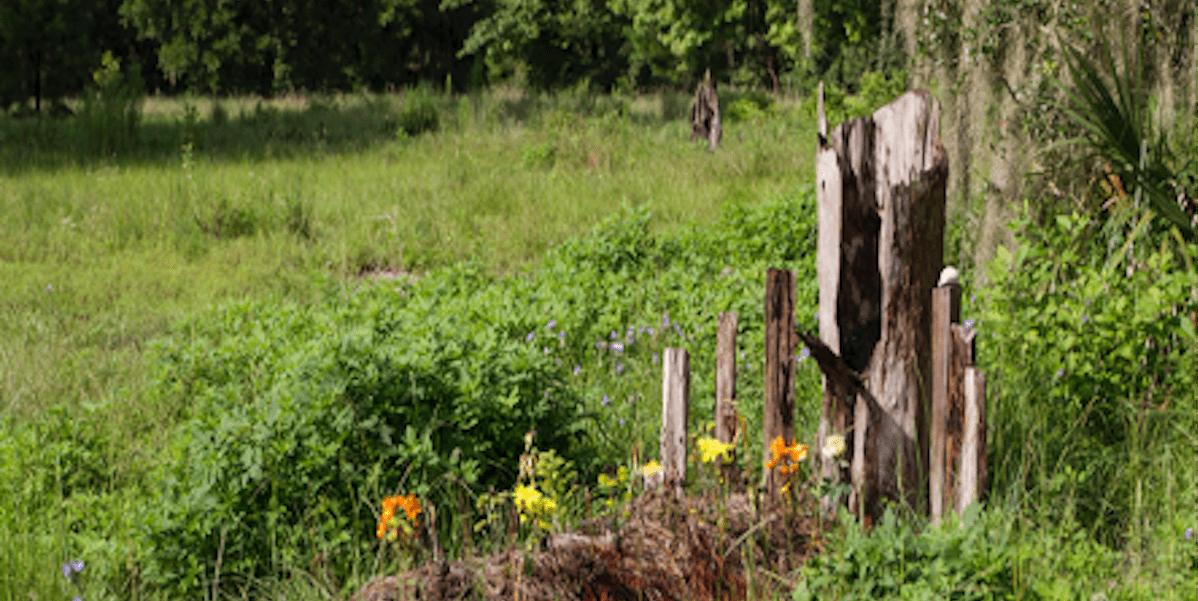 Conservation Cemetery Landscape